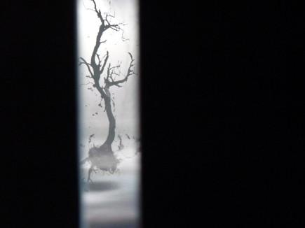 Forêt sous-marine. Détail